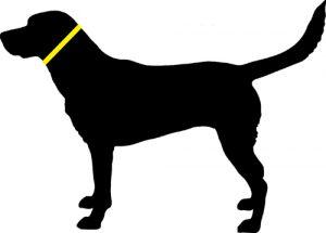 szyja psa miara zaciskowa